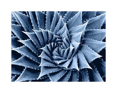 https://imgc.artprintimages.com/img/print/succulent-indigo-i_u-l-f8vgud0.jpg?p=0