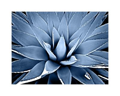 https://imgc.artprintimages.com/img/print/succulent-indigo-iii_u-l-f8vgwo0.jpg?p=0