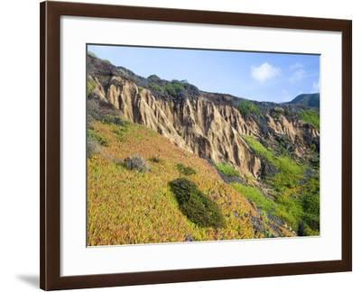 Succulent plants at Garrapata State Park on Big Sur Coast-Frank Lukasseck-Framed Photographic Print