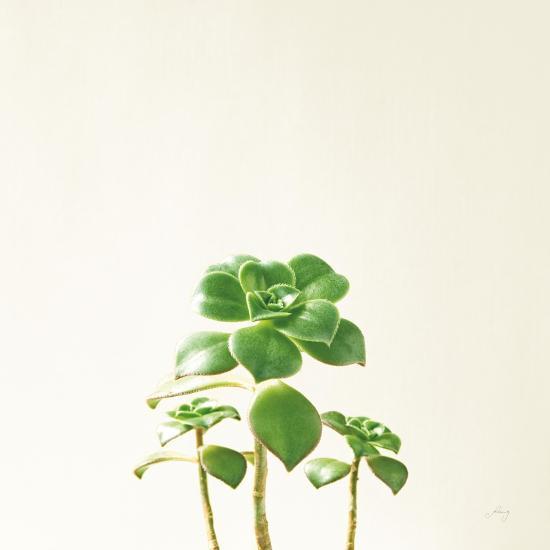 Succulent Simplicity IX Neutral-Felicity Bradley-Art Print