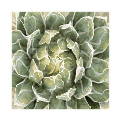 https://imgc.artprintimages.com/img/print/succulent-verde-iii_u-l-f8vffm0.jpg?p=0