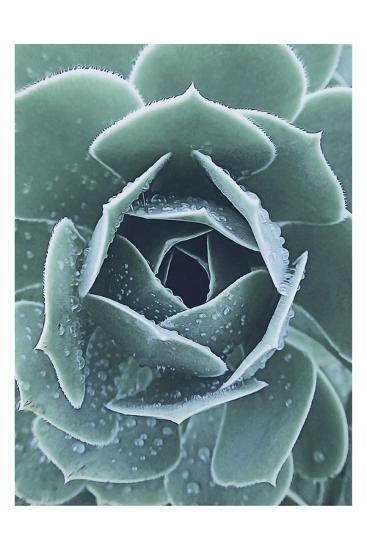 Succulent With Dew 1-Urban Epiphany-Art Print
