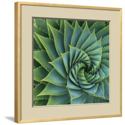 Succulent with Spiked Leaves-Micha Pawlitzki-Framed Photographic Print
