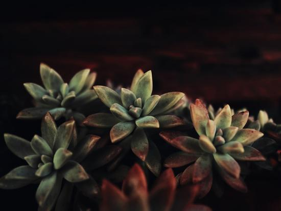 Succulent-Ingrid Beddoes-Art Print