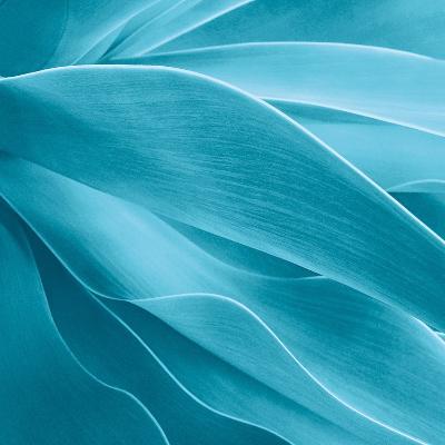 Succulent-Jan Bell-Photographic Print