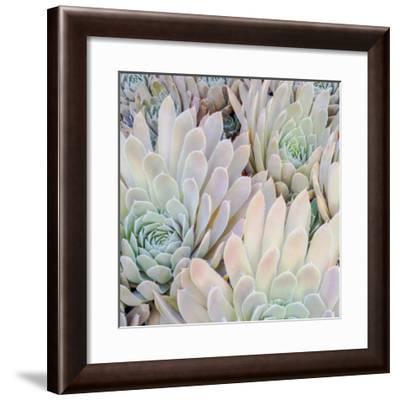 Succulents I-William Neill-Framed Art Print