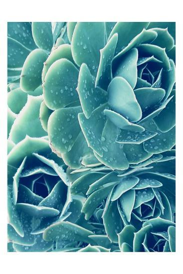 Succulents With Dew 2-Urban Epiphany-Art Print