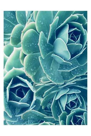 https://imgc.artprintimages.com/img/print/succulents-with-dew-2_u-l-q1g7q8f0.jpg?p=0