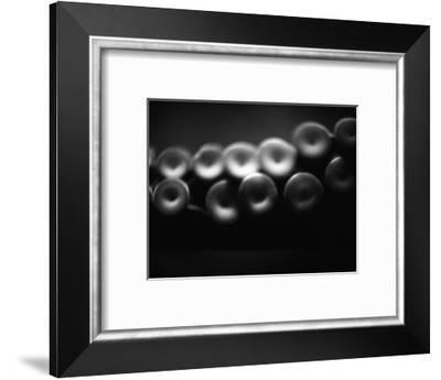 Suckers on Tentacle of Octopus-Henry Horenstein-Framed Photographic Print