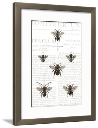 Bee Botanical Gray