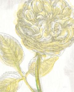 Belle Fleur Yellow III Crop by Sue Schlabach
