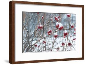 Berries in Winter by Sue Schlabach