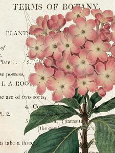 Bicolor Phlox Botany by Sue Schlabach