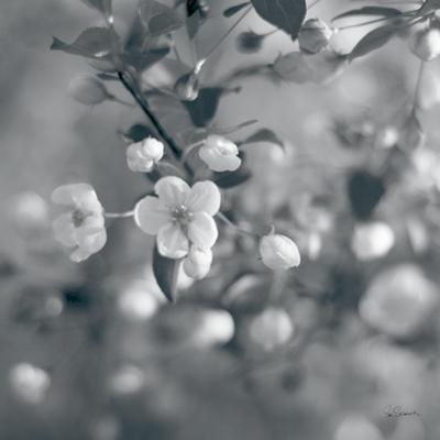 Blush Blossoms I Square BW