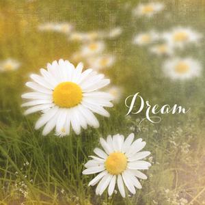 Daisy Dreams by Sue Schlabach