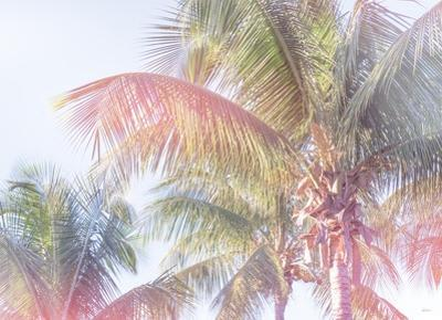 Dream Palm I by Sue Schlabach