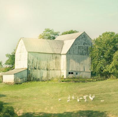 Farm Morning III Square