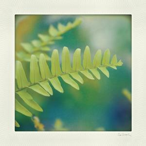 Natures Fern I by Sue Schlabach