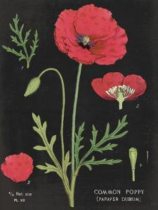 Poppy Chart by Sue Schlabach