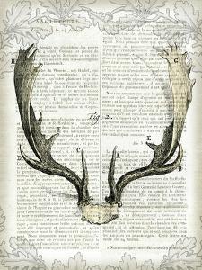 Regal Antlers on Newsprint II by Sue Schlabach