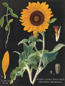 Sunflower Chart by Sue Schlabach
