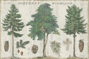 Woodland Chart I by Sue Schlabach