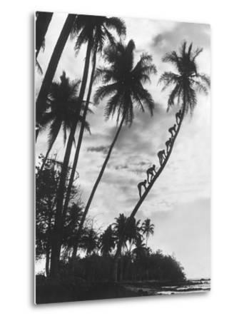 Palms on Hawaii, 1930s