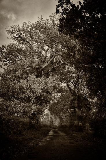 Suffolk Oak Trees-Tim Kahane-Photographic Print