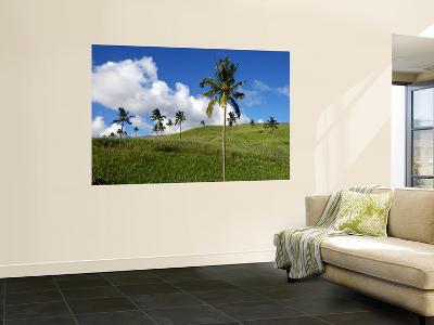 Sugar Cane Fields Baie Du Cap-Oliver Strewe-Wall Mural