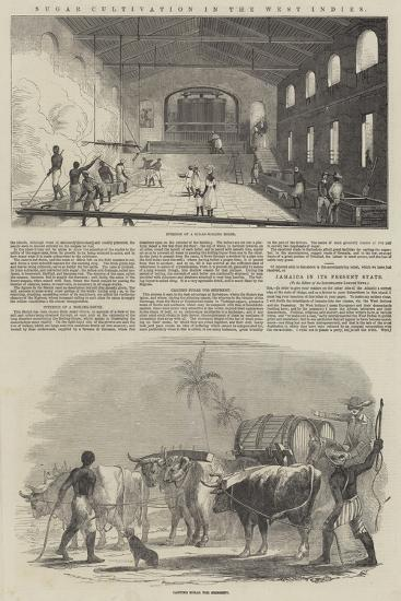 Sugar Cultivation in the West Indies--Giclee Print