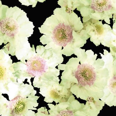 Night Flower Cascade II by Sukhanlee