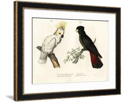 Sulphur-Crested Cockatoo, 1864--Framed Giclee Print