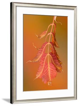 Sumac Twig-Ramona Murdock-Framed Photographic Print