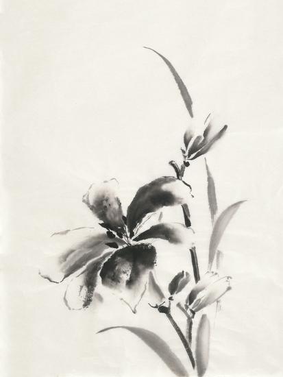 Sumi Daylily IV-Chris Paschke-Art Print