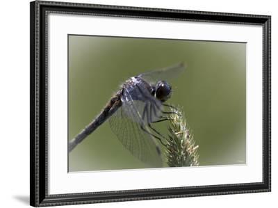 Summer 2012 #236-Gordon Semmens-Framed Photographic Print