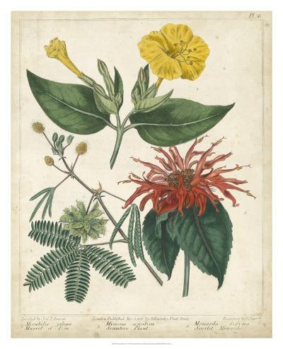 Summer Beauties I-Sydenham Edwards-Giclee Print