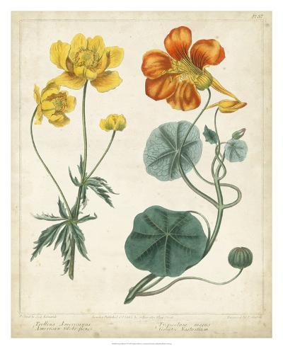 Summer Beauties II-Sydenham Edwards-Giclee Print