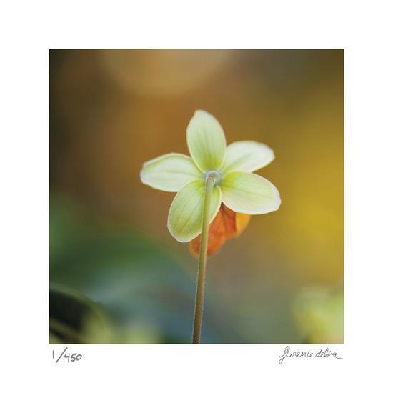 Summer Bloom 3-Florence Delva-Limited Edition