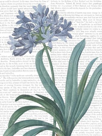 https://imgc.artprintimages.com/img/print/summer-botanicals-i_u-l-q19miw90.jpg?p=0
