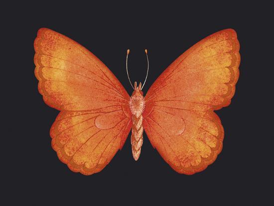 Summer Butterfly V-Sophie Golaz-Giclee Print