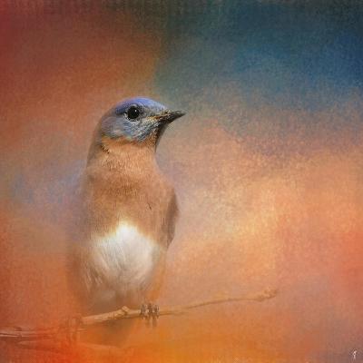 Summer Day Bluebird-Jai Johnson-Giclee Print