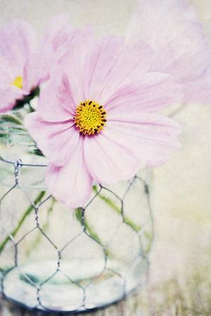 https://imgc.artprintimages.com/img/print/summer-days-iii_u-l-f7gfz90.jpg?p=0