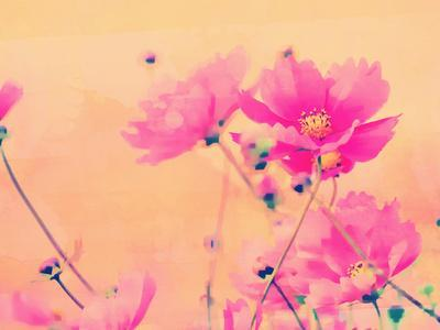 https://imgc.artprintimages.com/img/print/summer-flower-2_u-l-f8y4rf0.jpg?p=0