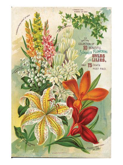Summer Flowering Bulbs &Lilies--Art Print