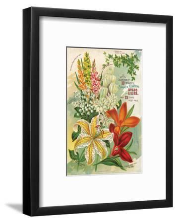 Summer Flowering Bulbs &Lilies