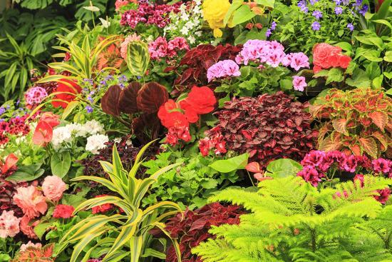 Summer flowers in a garden near Victoria, British Columbia-Stuart Westmorland-Photographic Print