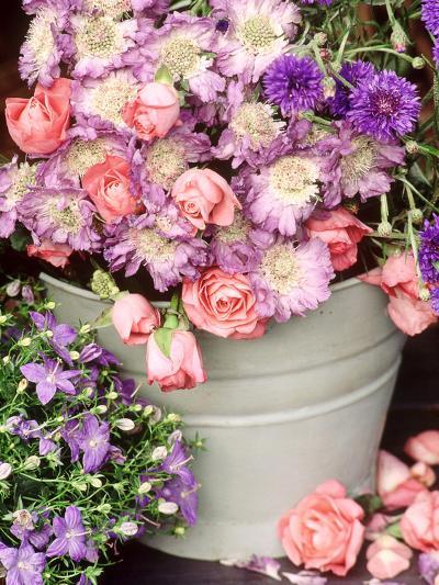 Summer Flowers in Bucket, Rosa, Scabiosa, Centaurea, Campanula-Lynne Brotchie-Photographic Print