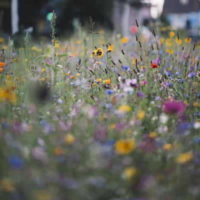 https://imgc.artprintimages.com/img/print/summer-flowers-meadows-on-the-roadsides-of-bielefeld_u-l-q1exqoq0.jpg?p=0