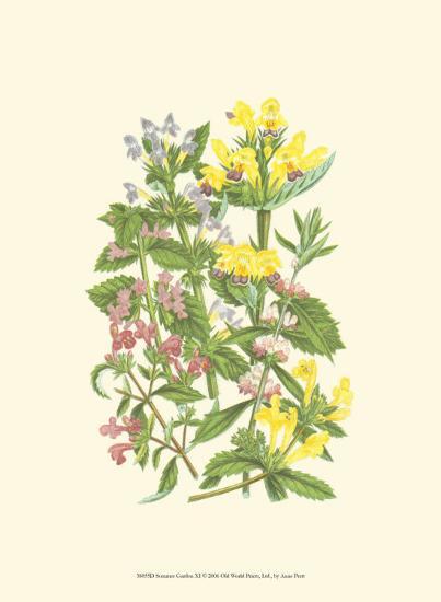Summer Garden XI-Anne Pratt-Art Print