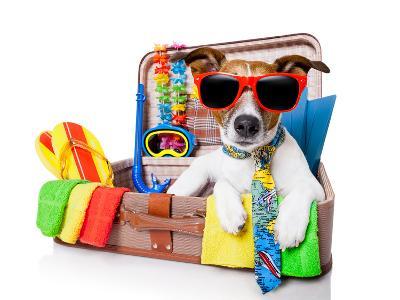 Summer Holiday Dog-Javier Brosch-Photographic Print